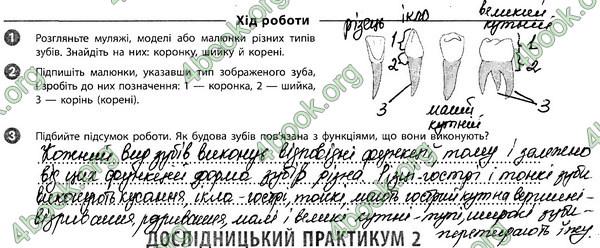 Ответы Зошит Біологія 8 клас Задорожний. ГДЗ